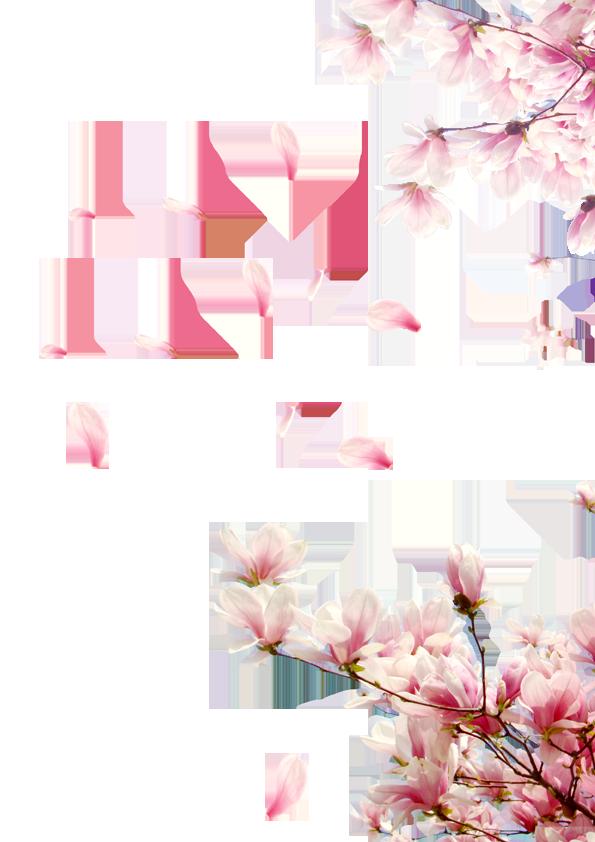 Flower Rose Peach Petal Creative,Petals Petals,Festival ...