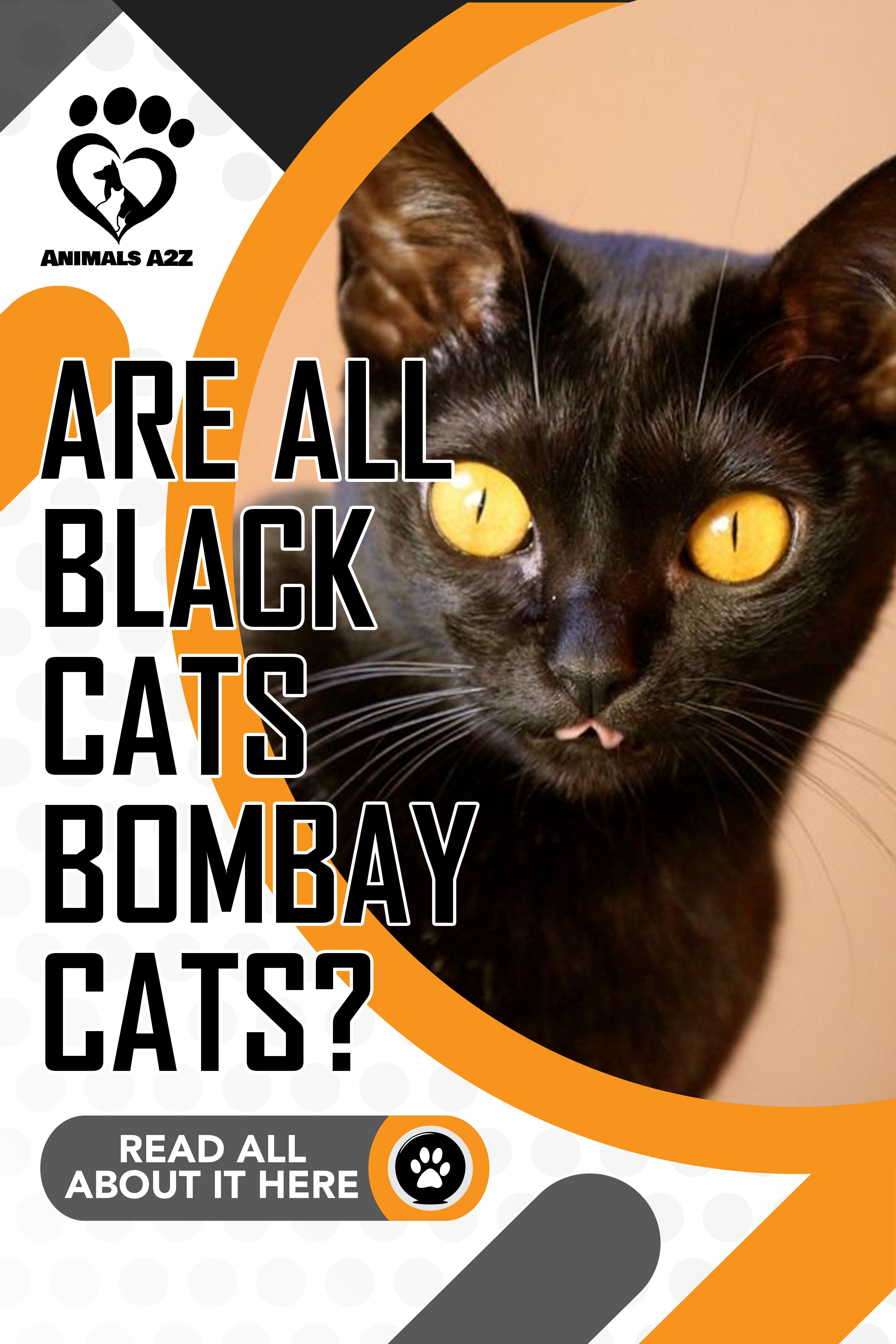 Are all black cats bombay cats cat facts in 2020
