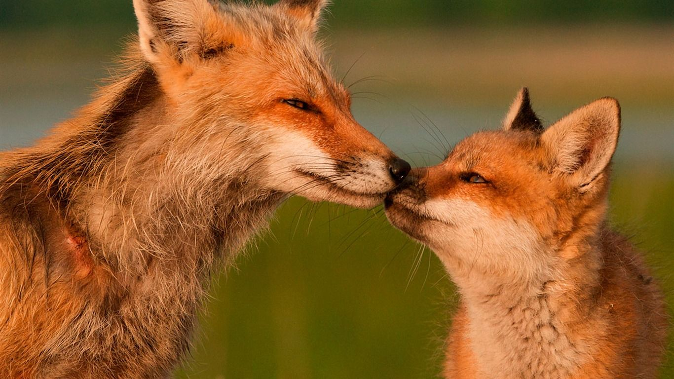 National geographic amazing animals national - National geographic wild wallpapers ...