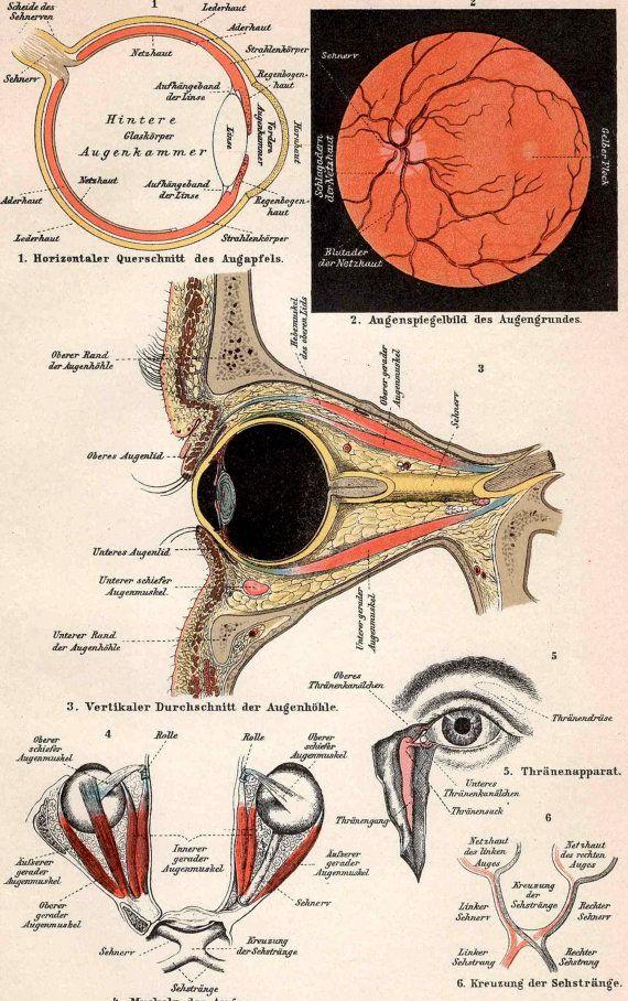 1903 ANTIQUE EYE ANATOMY print original antique human medical ...