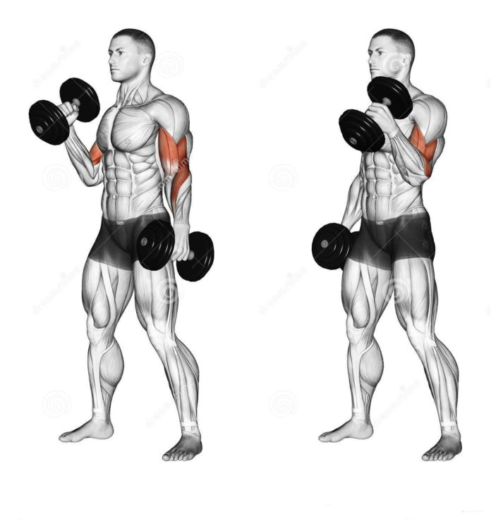 Back And Biceps: The Best Workout Combination (avec images ...