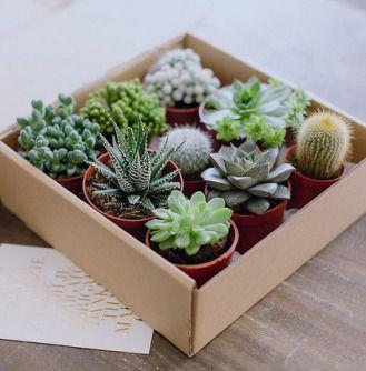 die besten 25 kleine kaktuspflanzen ideen auf pinterest mini kakteengarten kakteen garten. Black Bedroom Furniture Sets. Home Design Ideas
