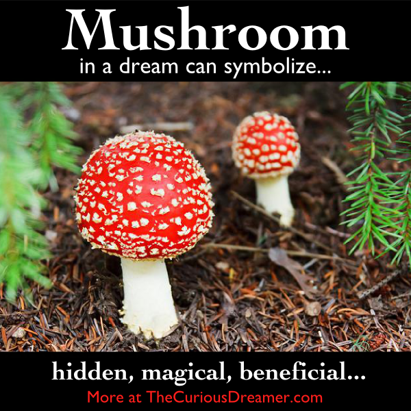 A Mushroom As A Dream Symbol Can Mean More At Thecuriousdreamer