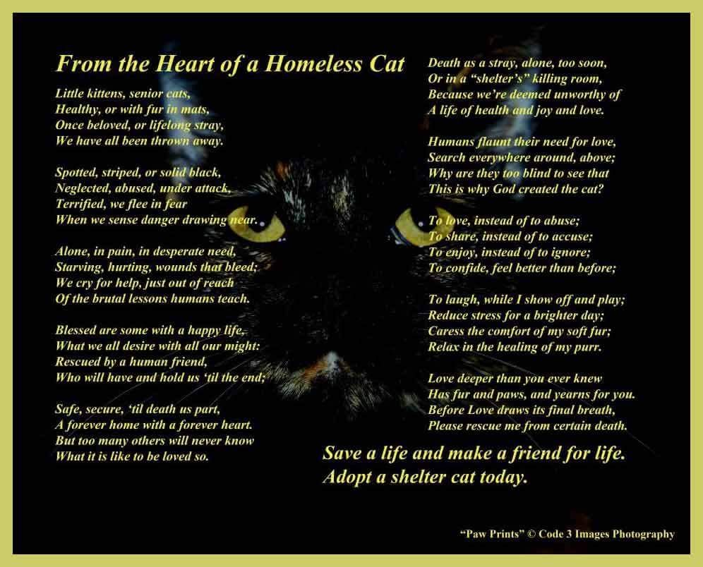 Quot From The Heart Of A Homeless Cat Quot Poem From The