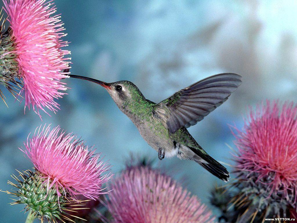 Tolle Hintergrundbilder Kostenlos desktop hintergründe vögel http wallpapic de tiere vogel
