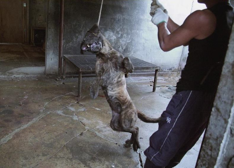 Peta Murders Cats And Dogs