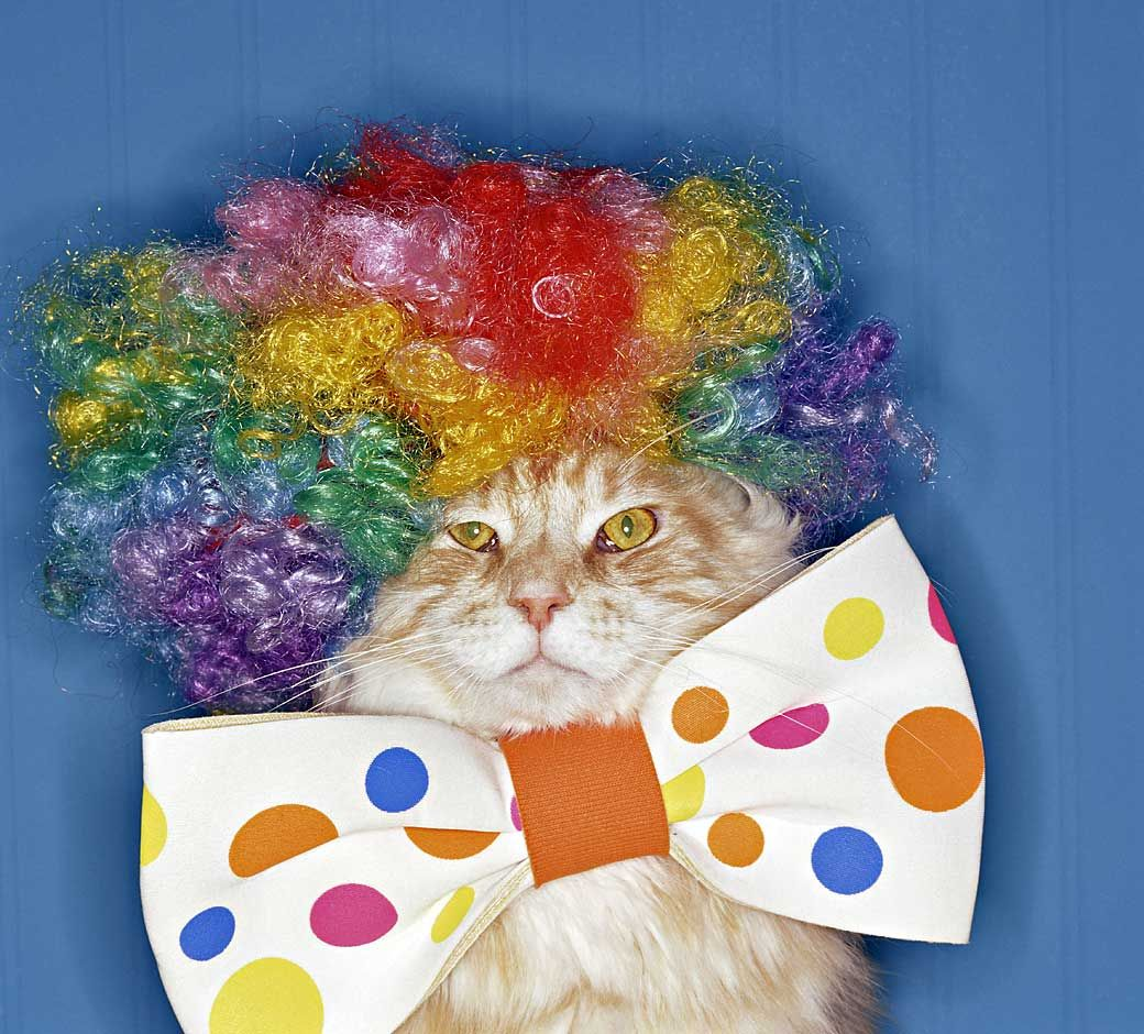 cats with costumes | Wonderful Photographs Of Cats In Costumes | FunnyandSpicy & cats with costumes | Wonderful Photographs Of Cats In Costumes ...
