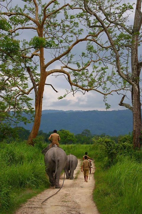 Kaziranga National Park Assam Amazing India
