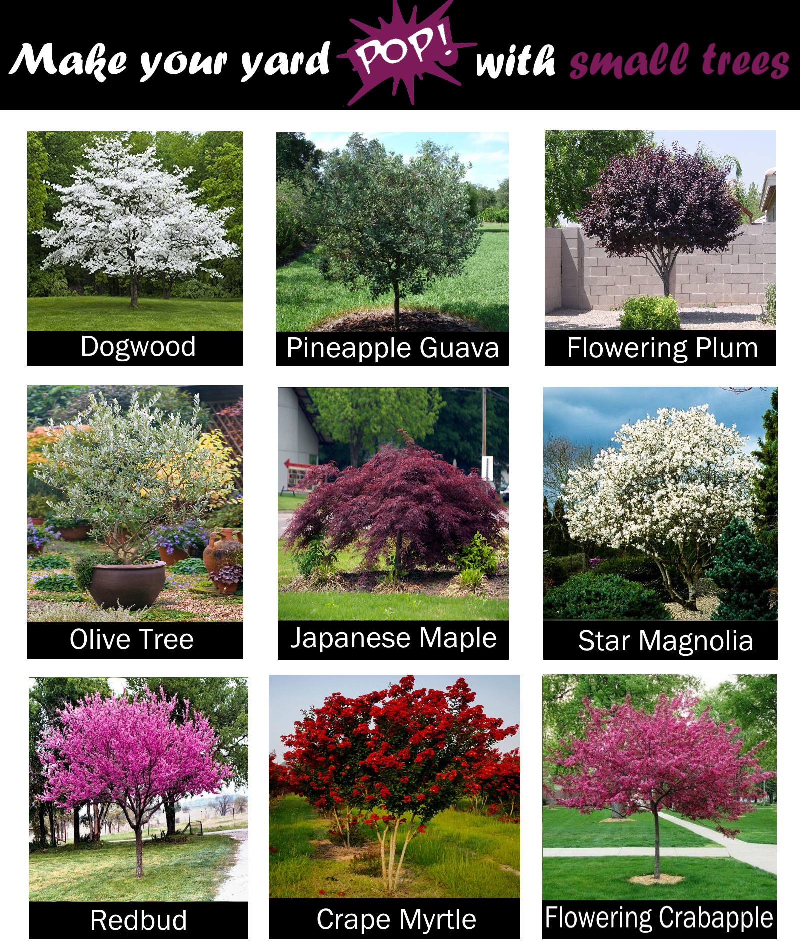 Want A Pretty Tree In Your Yard But Don T Have A Ton Of Space Here Are Some Of Front Yard Landscaping Design Backyard Landscaping Designs Trees For Front Yard