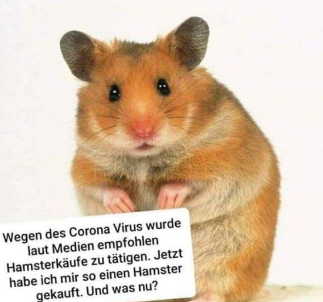 Pin Von Nini Auf Hamsterkauf In 2020 Witzige Bilder Spruche