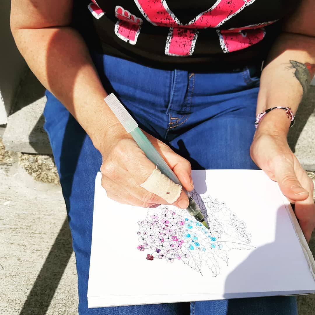 Hortensia En Cours Aquarelle Illustration Illustrator