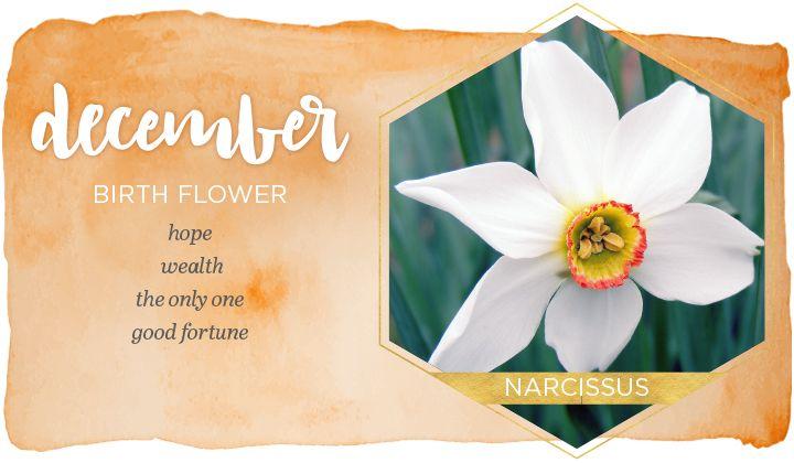 December birth flower narcissus birth flowers birth