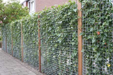 Groene Afscheiding Tuin : Schutting van betongaas met hedera kruidentuin