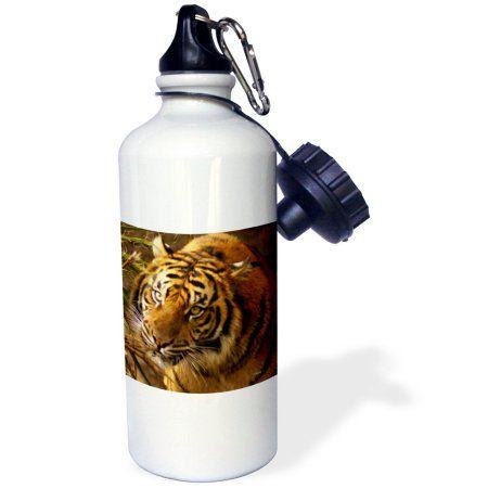 3dRose Bengal Tiger, Sports Water Bottle, 21oz