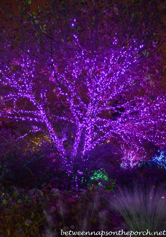 atlanta botanical gardens garden lights holiday nights 0123_wm - Atlanta Botanical Garden Lights