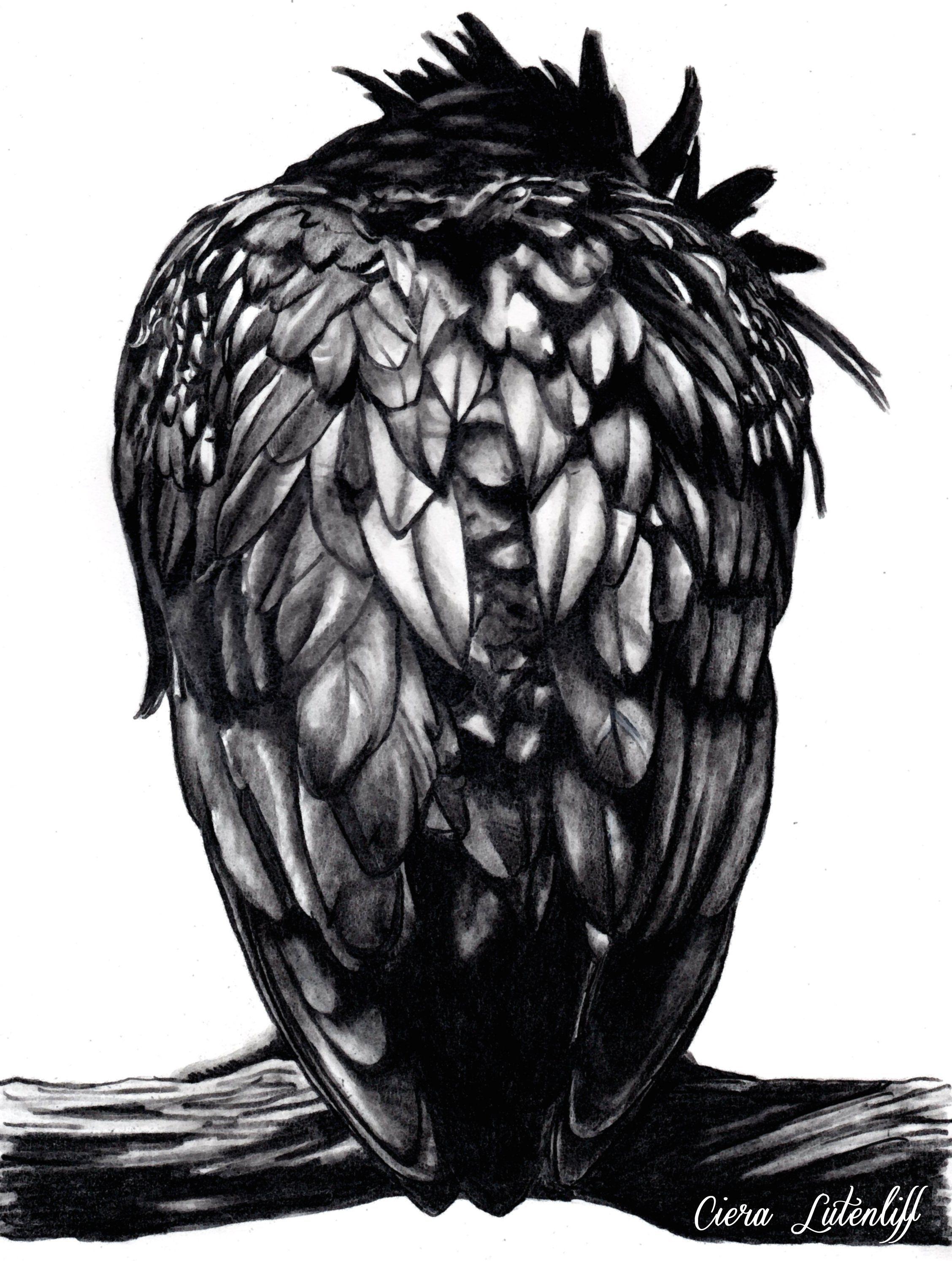 Corbeau Raven Crow   Corbeau, Dessin couleur, Dessin