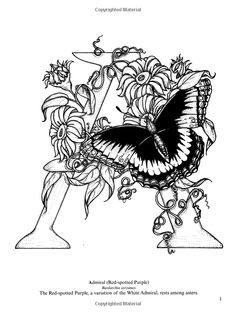 Dover Coloring Book Butterfly Alphabet Google Search Butterfly Coloring Page Coloring Books Coloring Pages