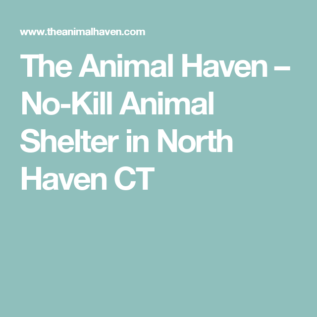 The Animal Haven No Kill Animal Shelter In North Haven Ct No Kill Animal Shelter Animal Shelter Save Animals