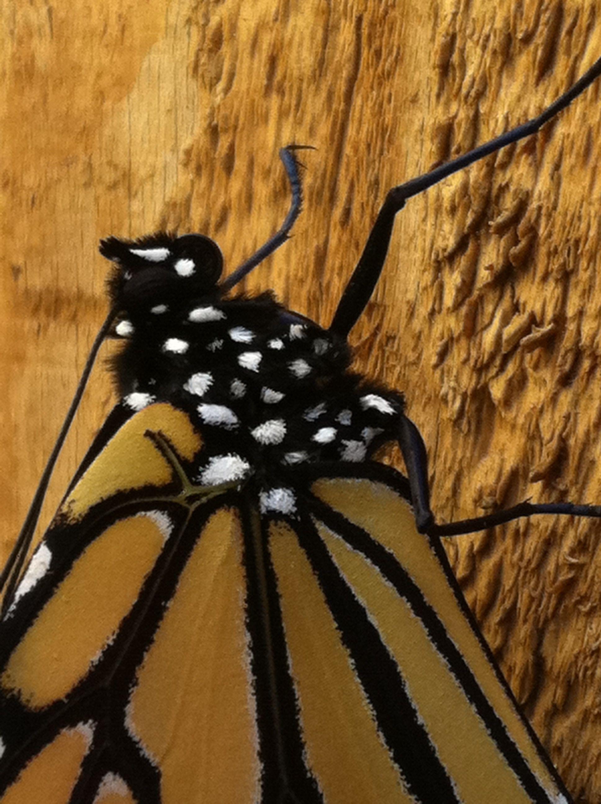 Cover idea October 2014   Butterfly artwork, Artwork