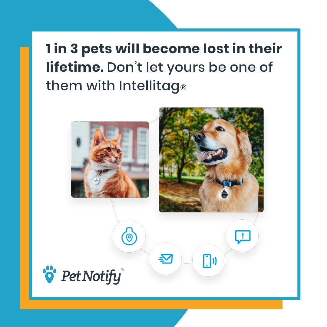 With The Pet Notify Intellitag We Automatically Call Email And Text You When Someone Finds Your Lost Pet If You Are Not Availa In 2020 Losing A Pet Pets Pet Finder