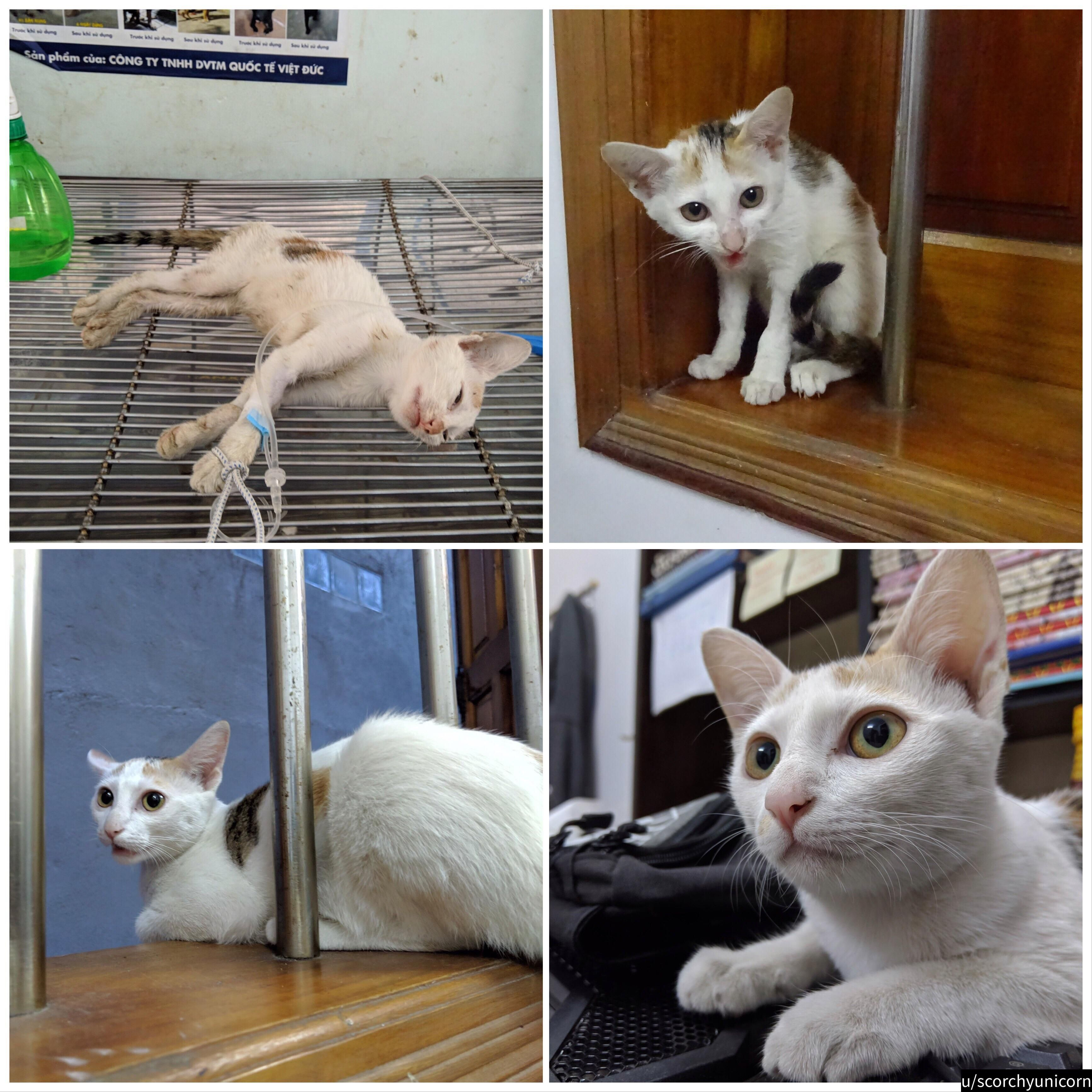 I adopted a stray cat 3 months ago. She was very weak and