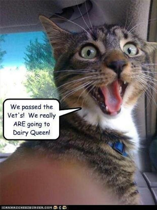 Dump A Day Funny Animal Pictures Of The Day - 23 Pics