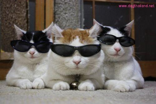 ภาพฮาๆกวนๆ Cat Wearing Glasses Cat Glasses Cute Animals