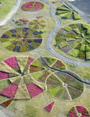 Jean Paul Ganem, Agricultural Compositions.  Created on top of waste using patterns of differing plants to give form.