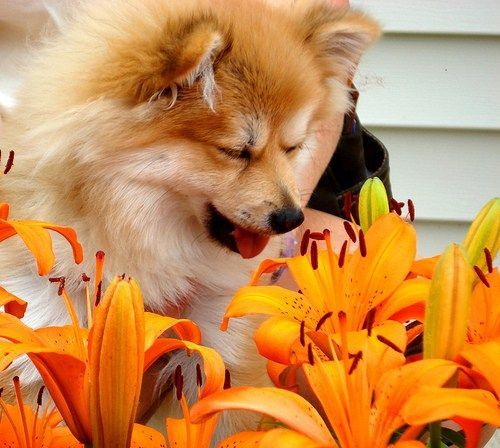 They're Not Just For Humans Anymore#allergies