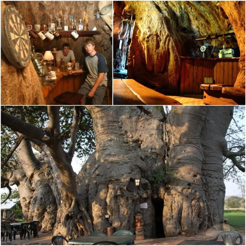 Image result for The Big Baobab (Modjadjiskloof, South Africa)