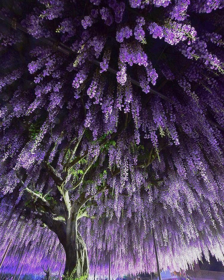 東京カメラ部 Popular Beautiful Nature Beautiful Flowers Nature