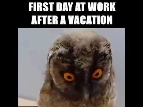 First Day Of Work Vacation Humor Funny Owls