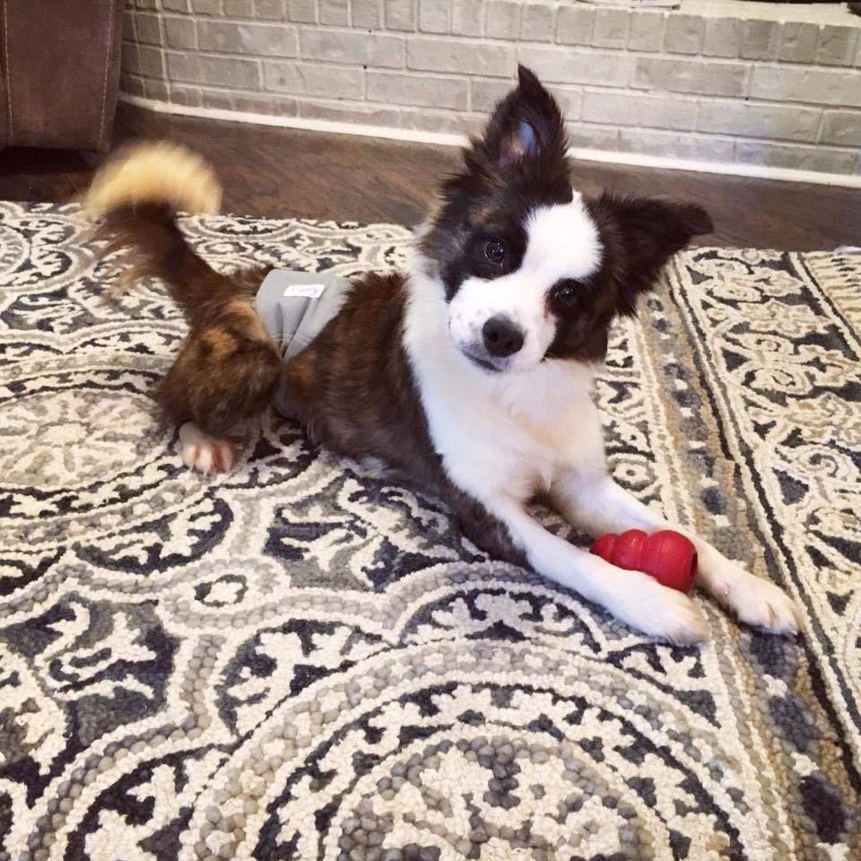 Adopt Ace on Petfinder Fur babies, Border collie, Collie