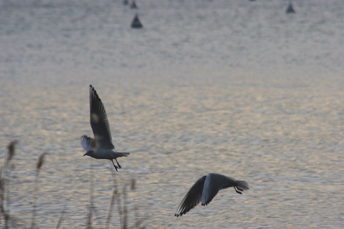 Volo d'uccelli #padenghe #lagodigarda #garda #gardalake