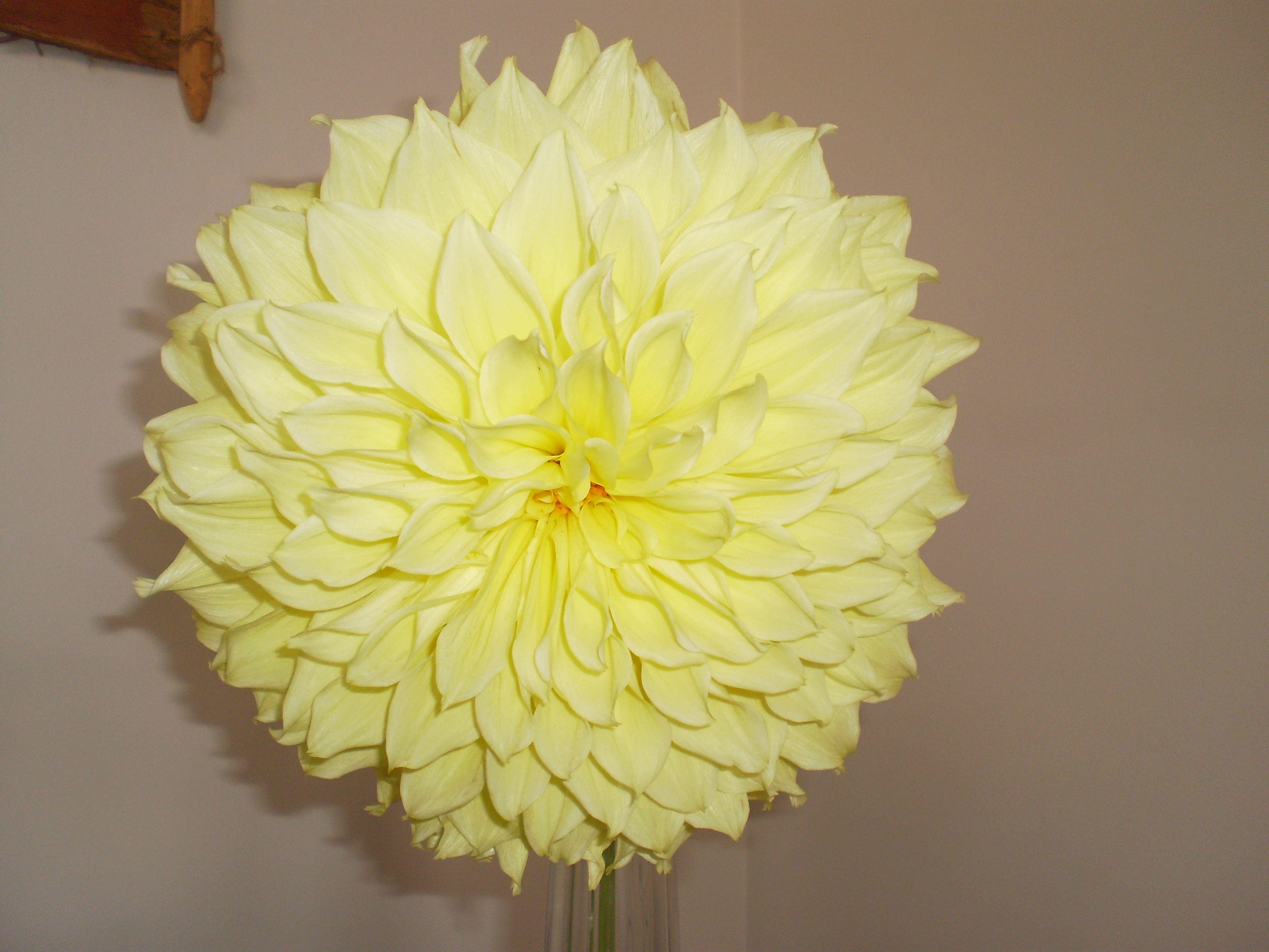 Dahlia Calvin Floodlight Novelty Lamp Paper Lamp Decor