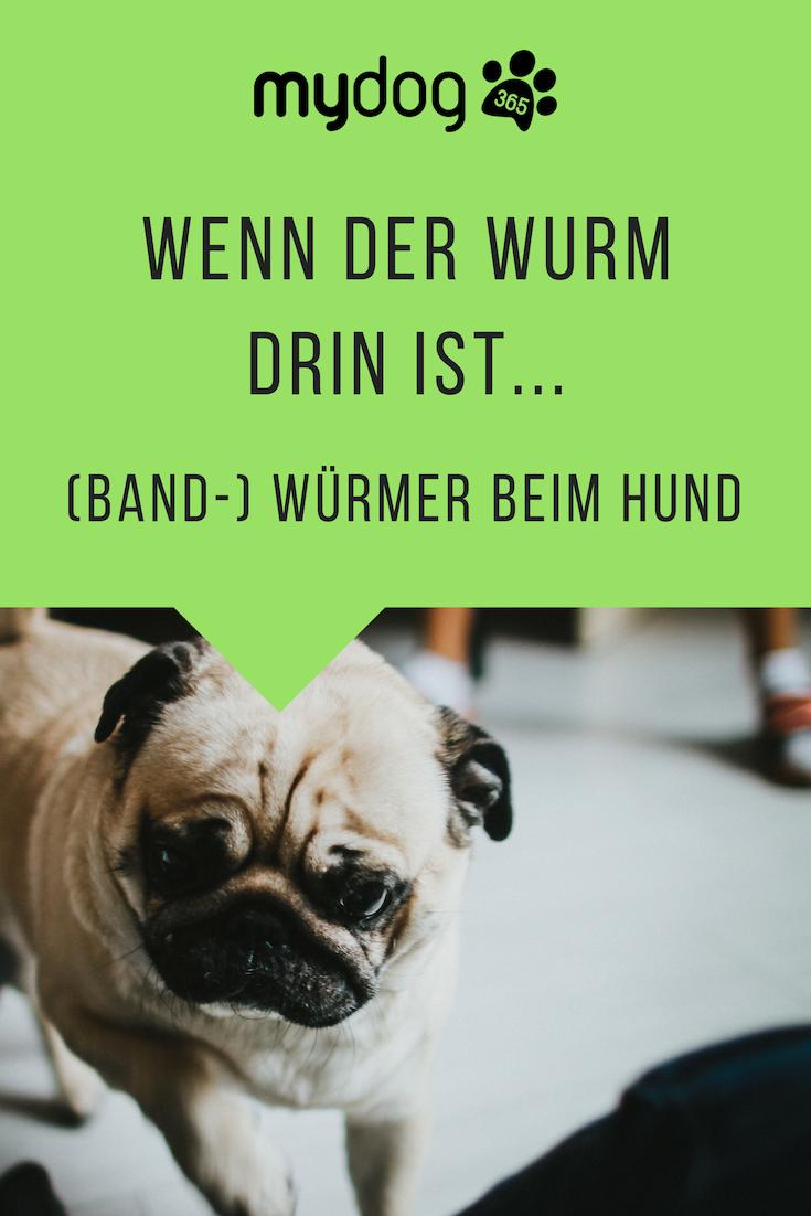 hund hat würmer