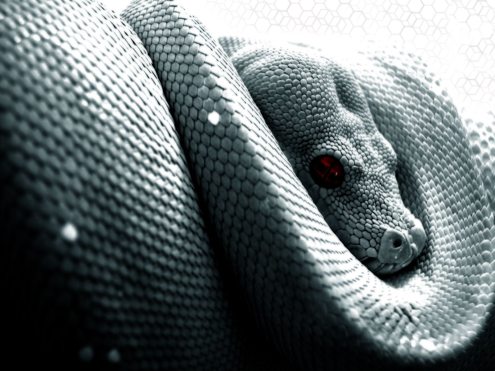 beautiful snake wallpaper hd images one hd wallpaper pictures 640