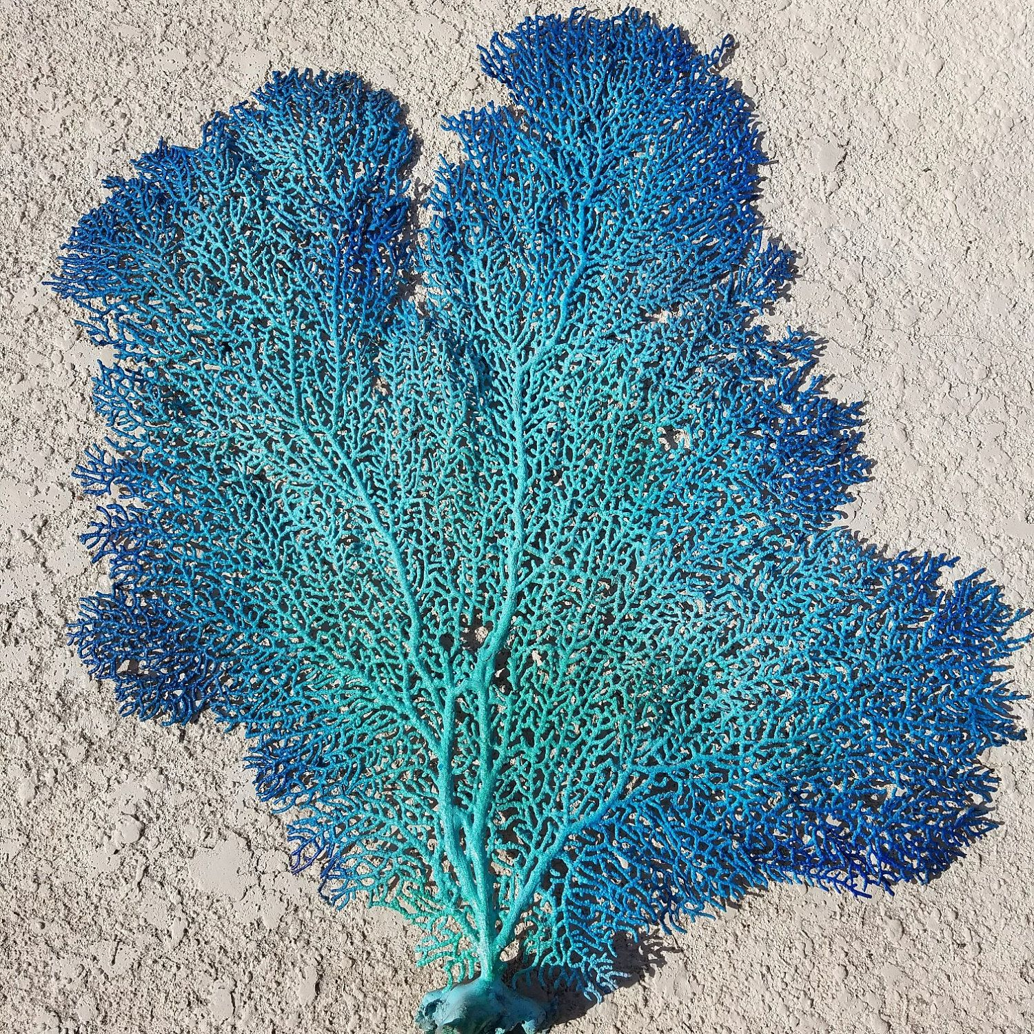 Natural Dried Sea Fan Coral Hand Painted Metallic Gold