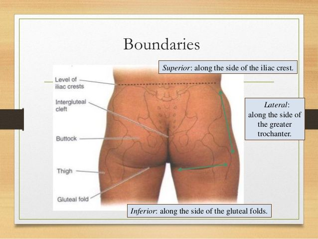 Gluteal Region Clinical Anatomy
