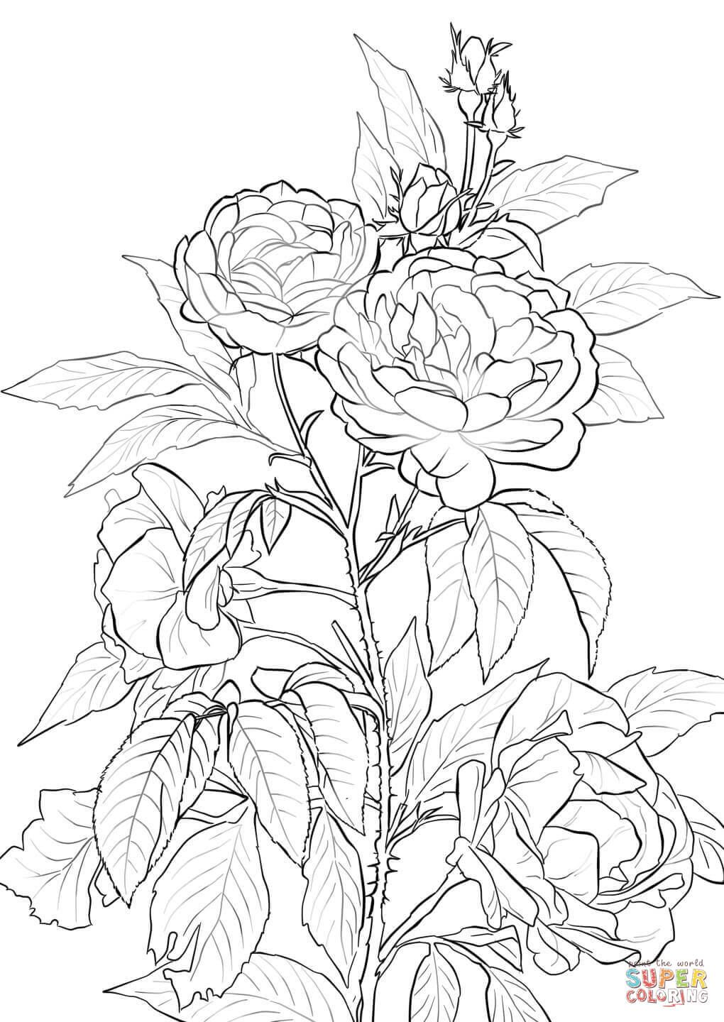 Rose Coloring Pages Printable | Coloring pages | Pinterest | Rose ...