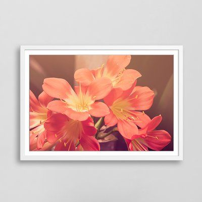 "Gallery Direct Pink Blossoms Framed Photographic Print Size: 20"" H x 28"" W x 2"" D"