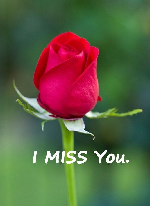 Best Love Quotes Love Sayings I Miss You Remember Me Beautiful Red Roses Beautiful Roses Red Rose Pictures