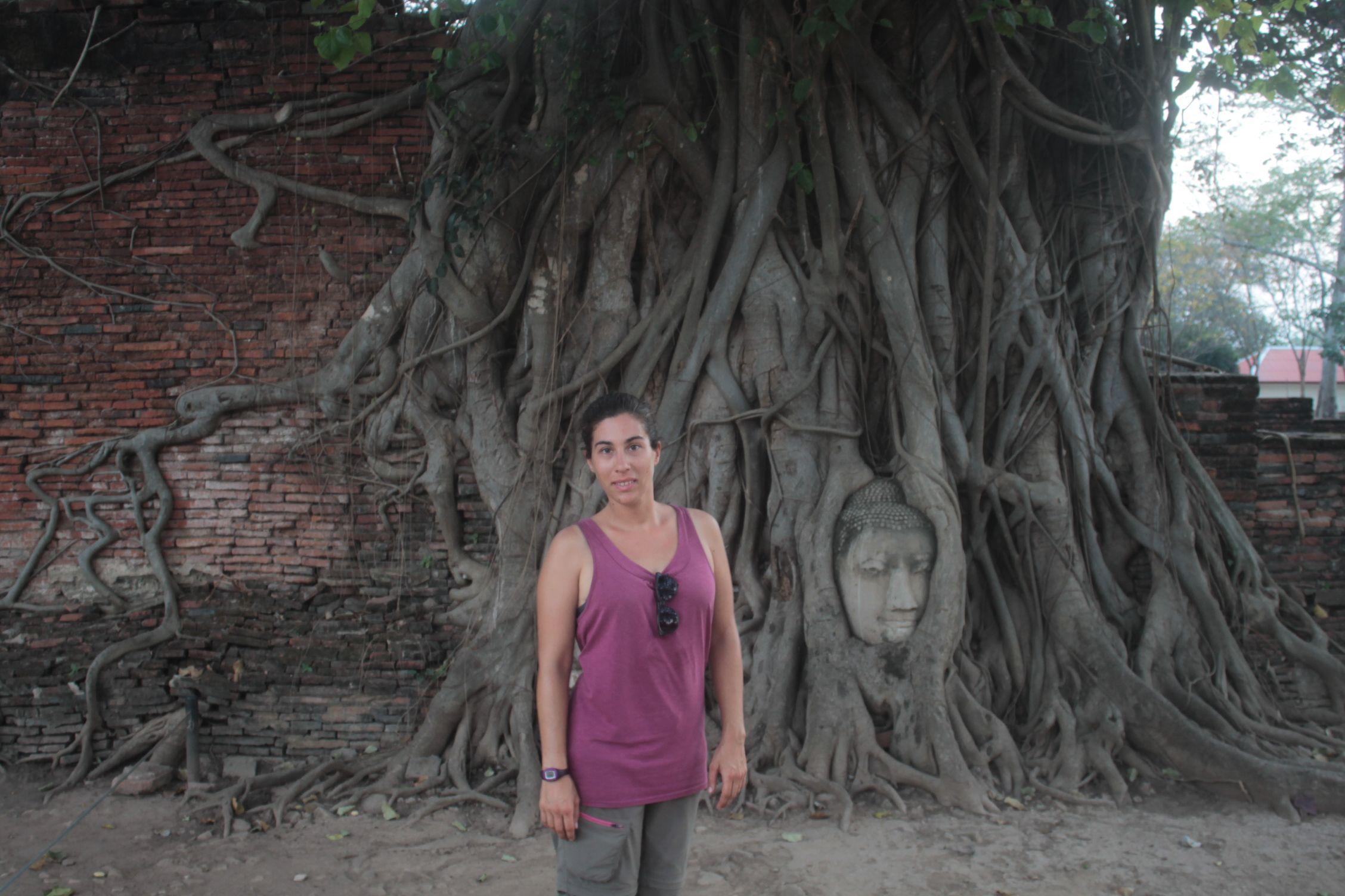 Cabeza de Buda entre las raíces