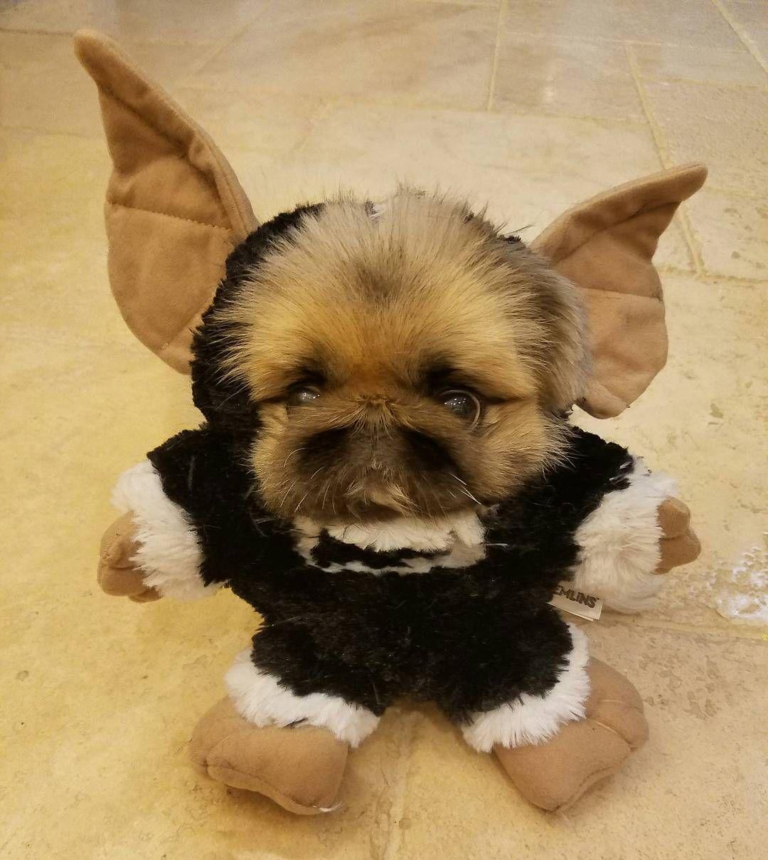 Konabears Gremlin Pekingese Dog Costume Halloween Dog