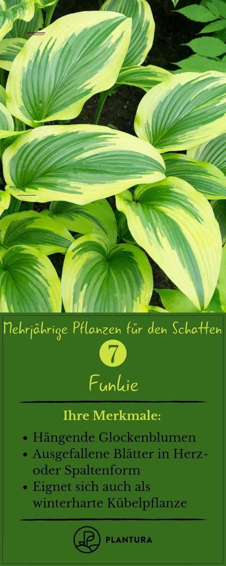 #pflegeleichtepflanzen