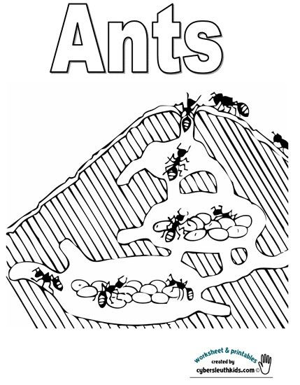 Ant activities for kids free coloring pages bugs and for Ant hill coloring page
