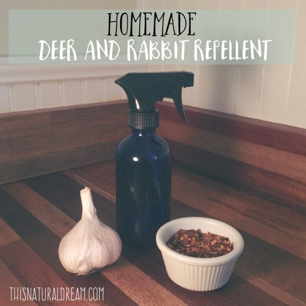 Our natural homemade rabbit and deer repellent works like ...