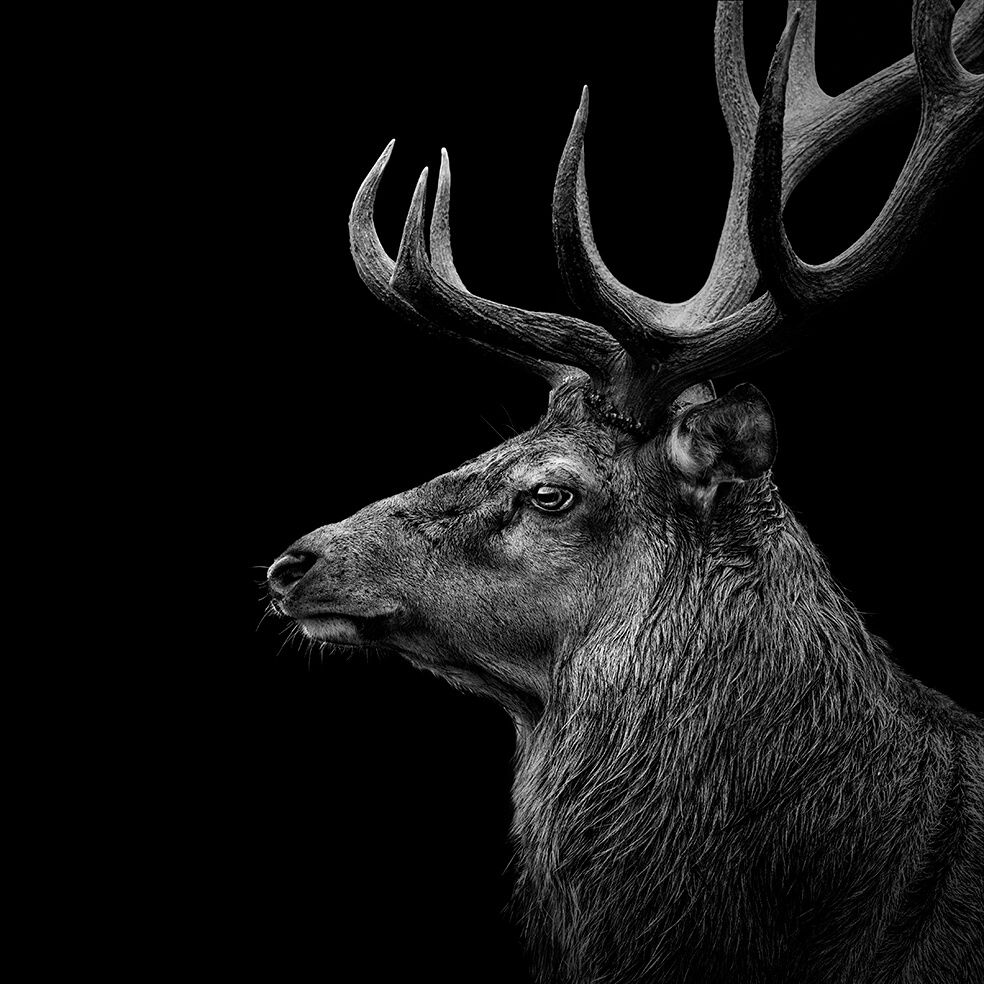 Black and white animals by lukas holas 13 1