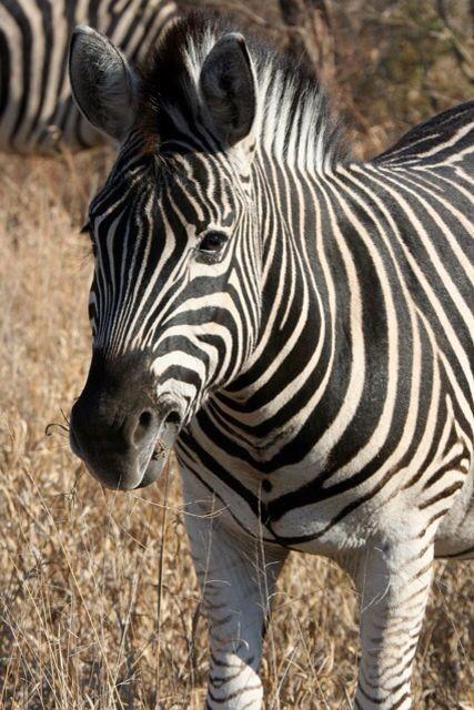 Up close stripes