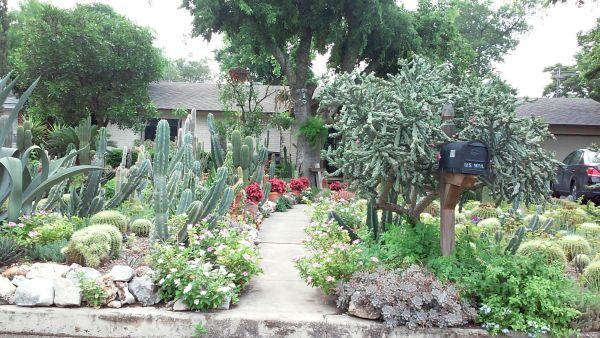 San Antonio Cactus Garden